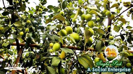 Singha Social Enterprise